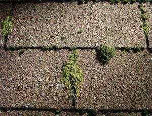 Фото: Причина повреждения крыши из мягкой кровли